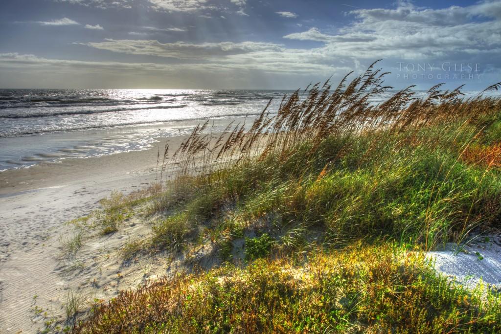 Sea Oats Daytona Beach Florida